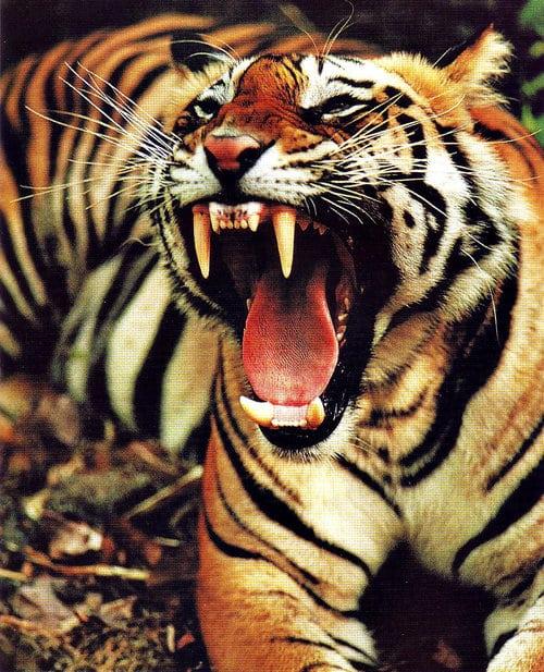 Дивите месоядни зверове нямат нищо общо с нас - Човекът не е хищник - Плоската Земя - СТАМАТ