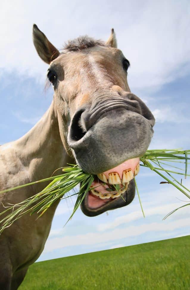 Човешките зъби са подобни на плодоядните и тревопасните животни - Плоската Земя - СТАМАТ