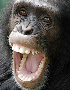 Плодоядните животни имат подобни на нашите зъби и хранителни навици - Плоската Земя - СТАМАТ
