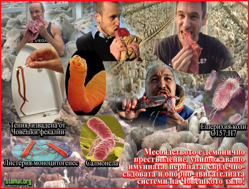 Месоядството---най-голямата-опасност-за-Човешкото-здраве---Плоската-Земя---СТАМАТ