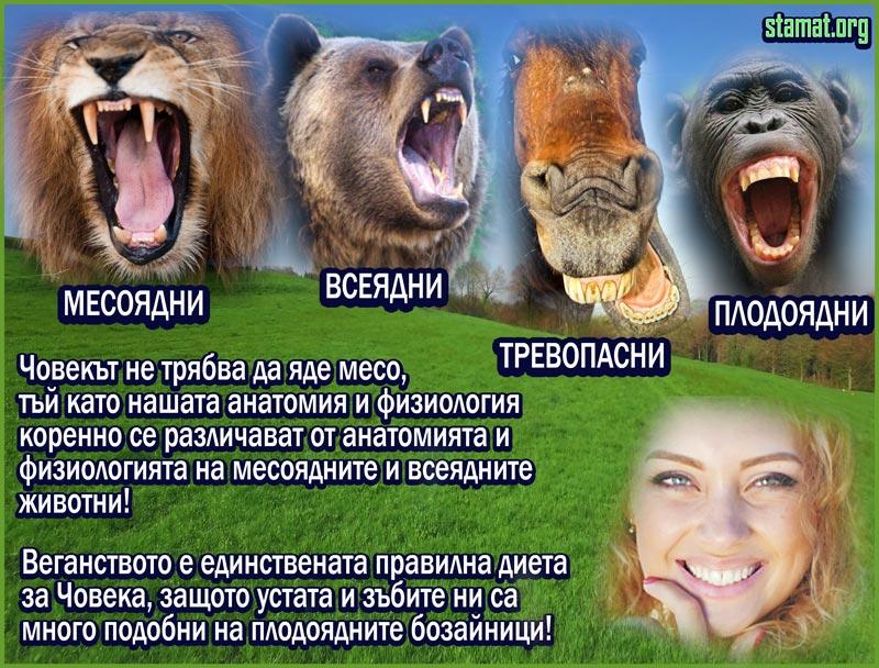 Човешката-уста-не-е-устата-на-месояден-бозайник---Плоската-Земя---СТАМАТ---web