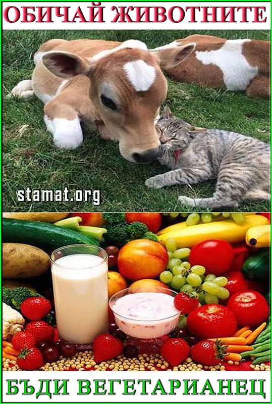 бъди-вегетарианец---СТАМАТ